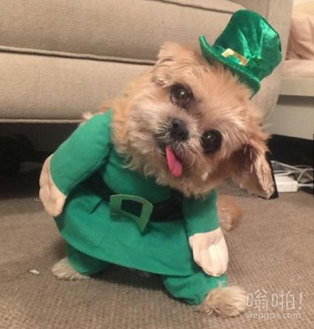 相信我,我没醉!快乐圣帕特里克节!