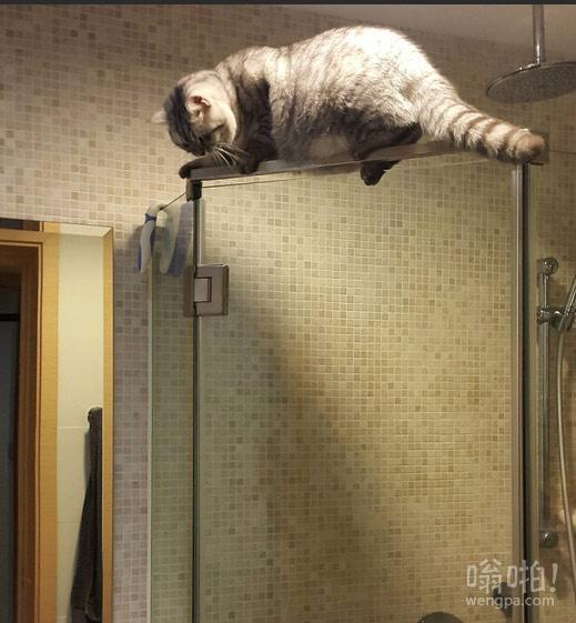 下班后,发现浴室有猫叫。。。。这货怎么上去的
