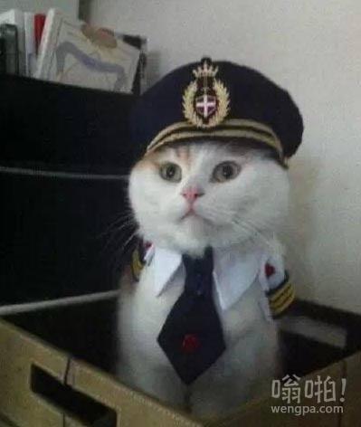 我是白猫警长,请大家多多关照哦喵!