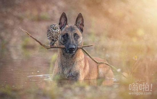 他是一个特立独行的狗,她是谁不遵守游戏规则的猫头鹰。它们共同打击犯罪。