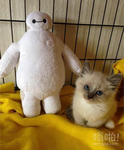 我只是得到了一个新的小猫
