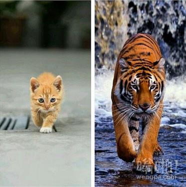 不同的尺寸,同样的态度