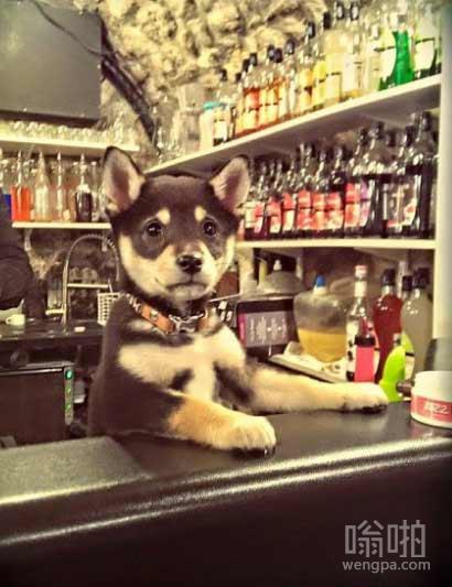 您喝点什么