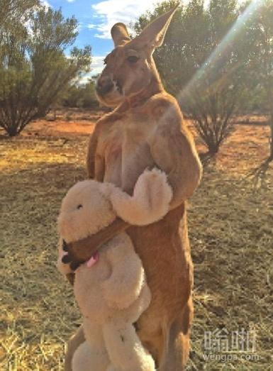 这袋鼠很喜欢我给他的毛绒玩具