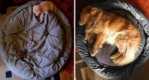 狗狗长大了