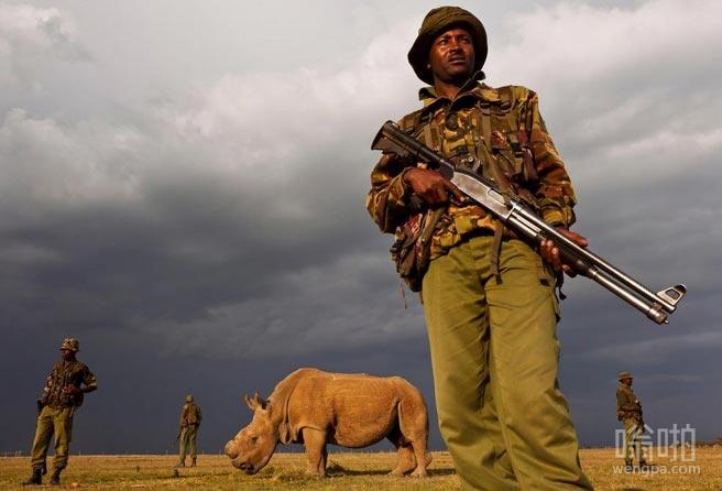 最后一只白犀牛:武装警察守护最后仅存白犀牛