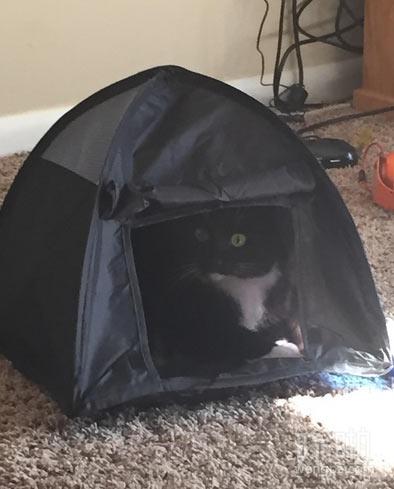 给这货买了个帐篷,现在它天天待在里边不出来了