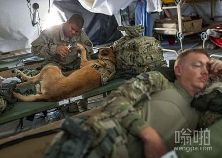 名为Oopey的炸弹嗅探狗在阿富汗坎大哈执行任务前,得到它的主人为其脚趾修剪指甲