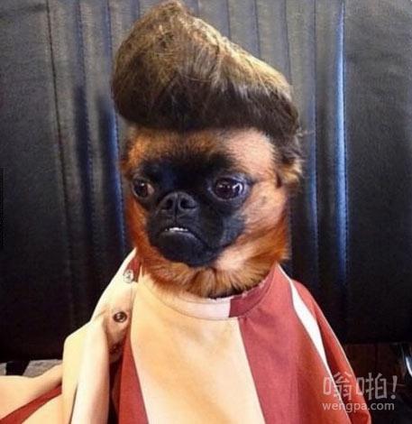 带二汪去做头发,这货从镜子中看到自己后陷入沉思
