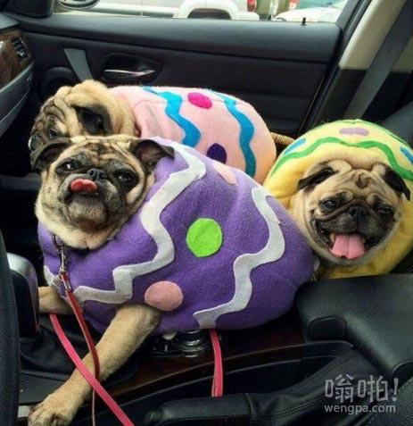 大家复活节快乐!