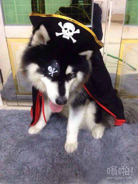 都让开,海盗船长阿汪来了