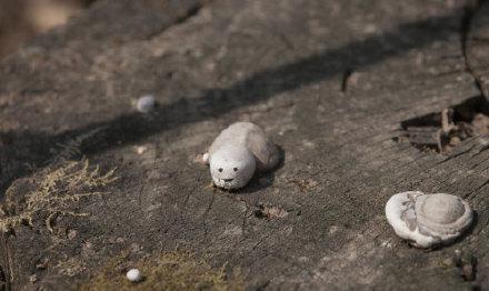 在吉林松花湖拍到的一只拳头大小的野生白灵芝,莫名的萌感