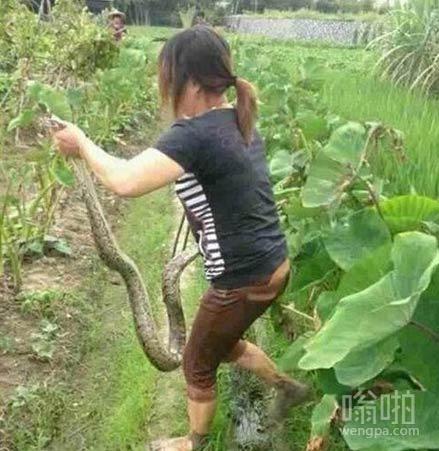 女汉子徒手抓蛇
