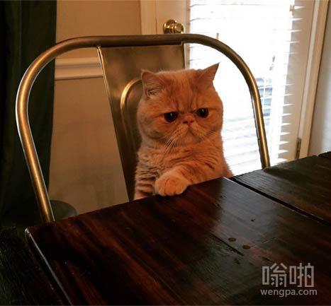 乔治猫有心事