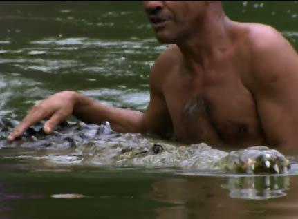 视频实拍哥斯达黎加巨型鳄鱼与恩人野外同游