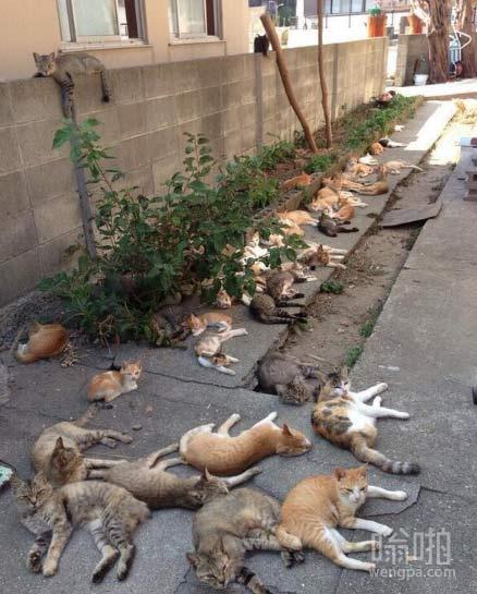 """猫薄荷与猫 怎么感觉就是猫儿聚众""""吸大麻"""""""