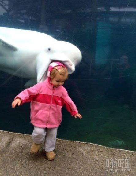 这白鲸喜欢跟孩子互动