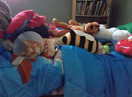 喵星人病了,主人为为了让它觉得舒服点在床上放了很多玩具