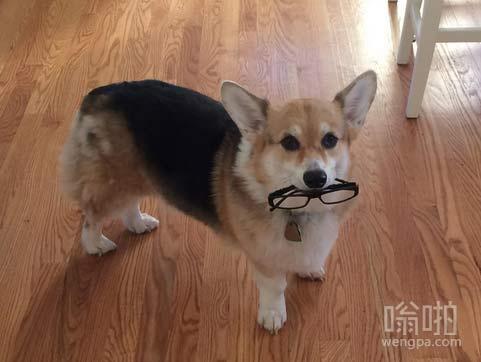 有用的狗狗。。。。能帮助主人跑腿了