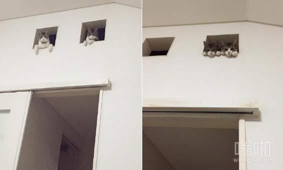 猫咪是这样欢迎主人回家的