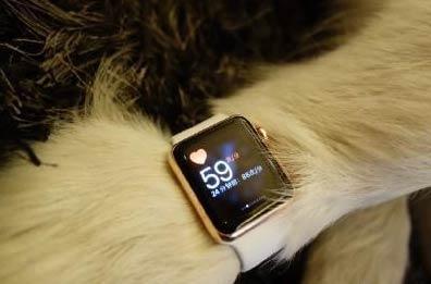 王思聪为爱犬配两只Apple Watch手表 有钱人的狗狗还会看时间