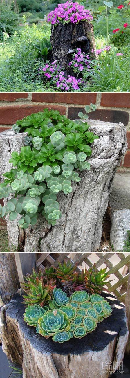 老树桩变成美丽的花盆