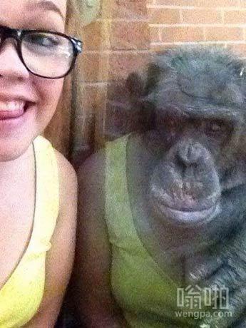 反射使得这个黑猩猩看起来像它穿她的衣服。