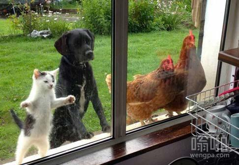 中午在厨房搞饭吃,一群吃货围了上来