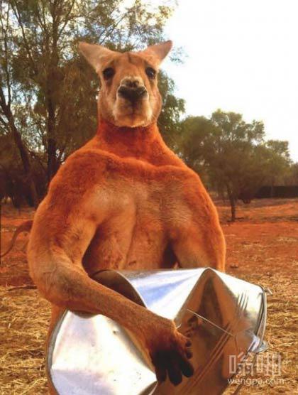不要随便惹澳大利亚的动物