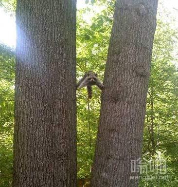 方便面君一定更贝尔学过攀爬技术