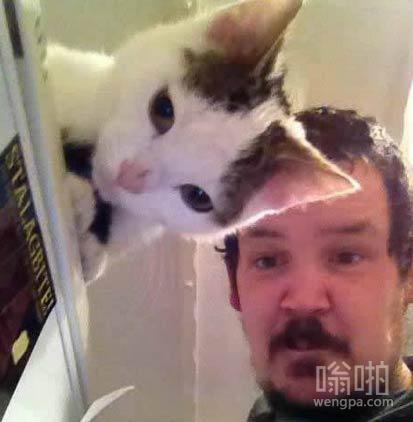 【猫搞笑图片】猫的耳朵与人的发型完全吻合