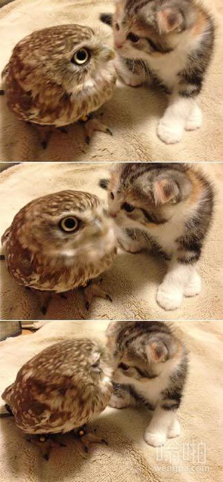 猫头鹰和猫 显然猫头鹰对于突然而来的亲吻还没做好思想准备