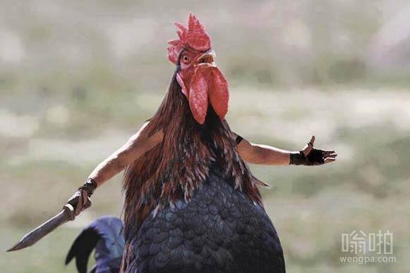 复仇的母鸡