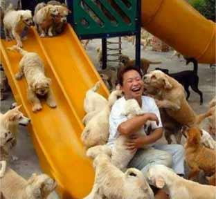 她在玉林花了8000美金买了这些狗