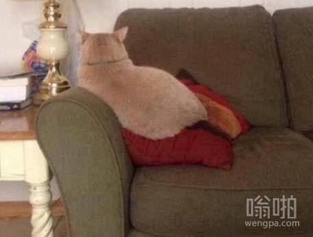 当你和你的猫冷战