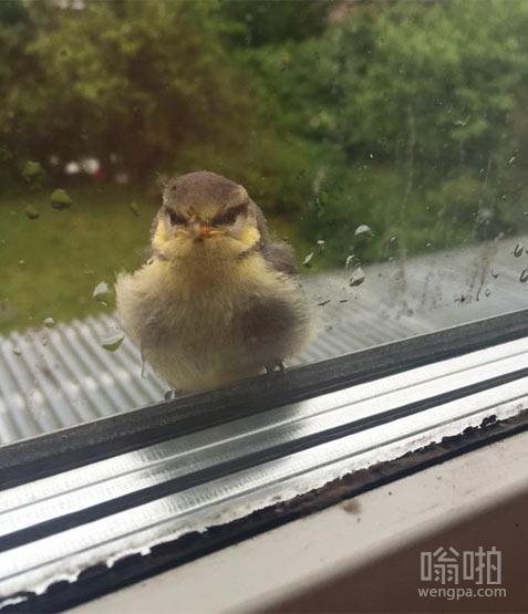 这只鸟落在我的窗口,盯着我,就像我杀了他全家。
