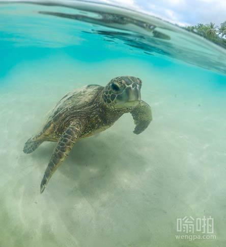这海龟快游到我在的沙滩上