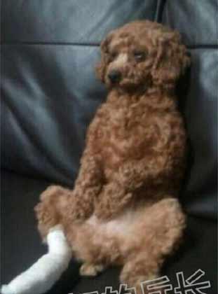 我家狗狗从医院回来之后貌似生生气了