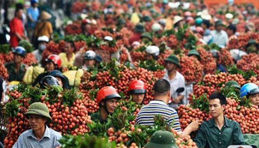 越南荔枝市场 一眼望不到头的荔枝啊