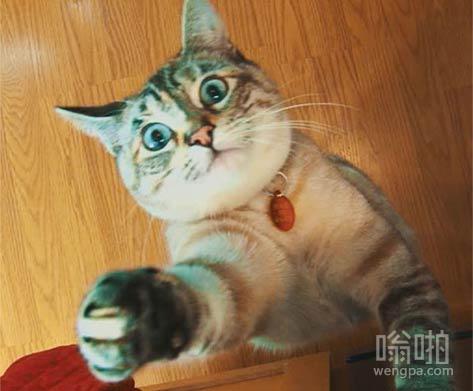 【猫搞笑图片】发现有人拍照,喵星人飞身就要抢相机