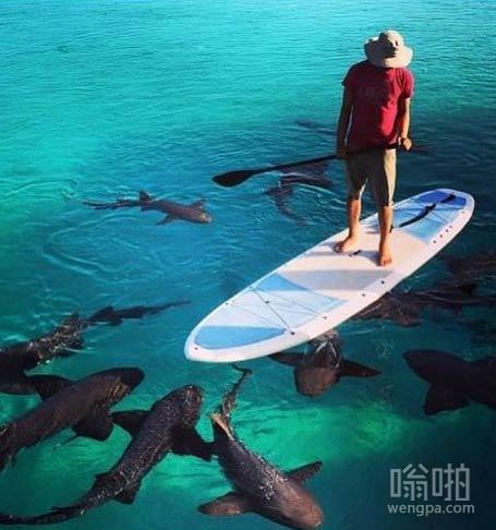 他们是护士鲨。完全无害的