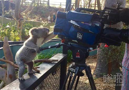 考拉摄像师