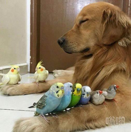 这些鸟真会挑地方呆
