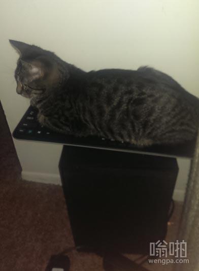 这猫喜欢呆在键盘上 所以专门给它买了一个
