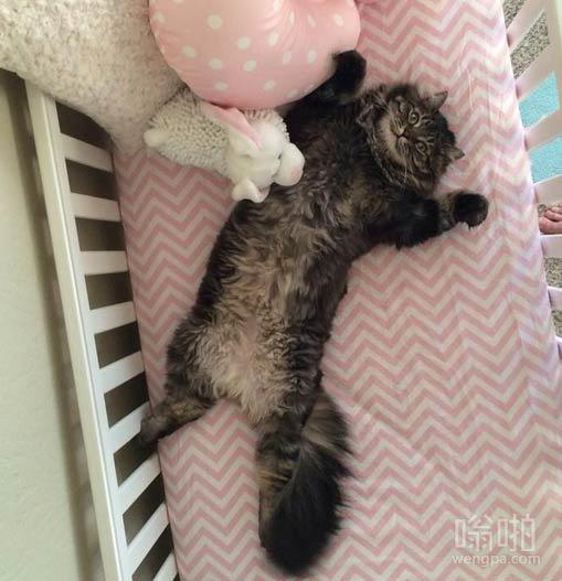 这猫肯定以为放在房间的婴儿床是它的
