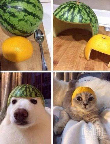 【动物搞笑图片】之前动物的战争