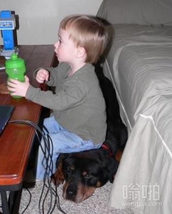 有用的狗狗 这凳子好舒服