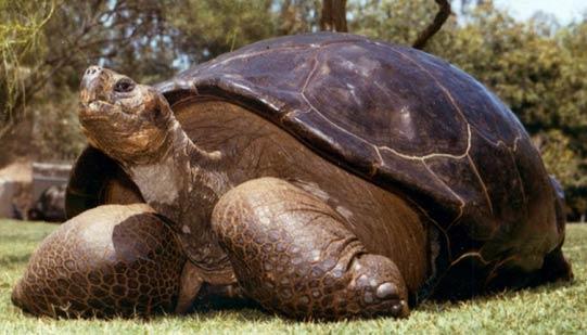 快150岁乌龟死在圣地亚哥动物园。自1933年以来这只乌龟一直住在那里