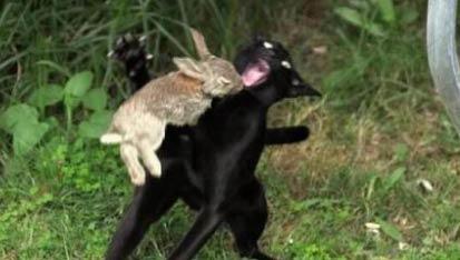 这狗被兔子吓惨了