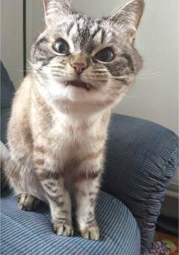 我是一个吸血鬼不是猫!
